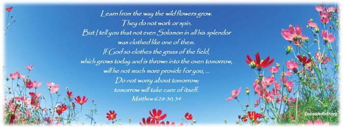 If God so clothes the grass of the field...will he not much more provide for you. Matthew 6:28-30 embeddedfaith.org